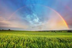 Rainbow over spring field Stock Image