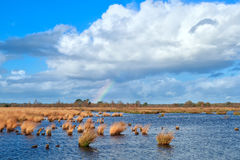 Rainbow over the swamp and blue sky Royalty Free Stock Images