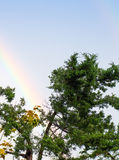Rainbow over a tree Royalty Free Stock Image