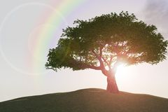 Rainbow over tree on hill. Three dimensional illustration of rainbow over leafy tree on hillside with sunlit background Stock Photos