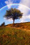 Rainbow over tree Stock Photography