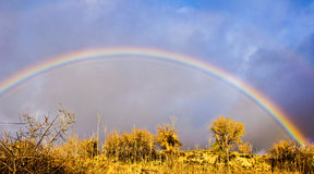 Rainbow over the trees Royalty Free Stock Photography
