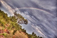 Rainbow over the Trees Royalty Free Stock Photos