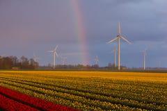 A rainbow over tulips stock photos