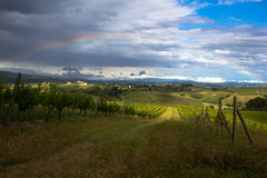 Rainbow Over Vineyard. Taken after a spring thunderstorm in a chianti vineyard, Tuscany, Italy Stock Photography