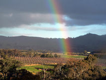 Rainbow Over Vineyard - some noise. View from resort hotel in Barossa Valley, Australia of a rainbow over a vineyard Stock Photos