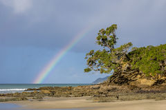 Rainbow over Waipu Cove with Pohutakawa Stock Images