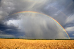 Rainbow over the wheat field Royalty Free Stock Images