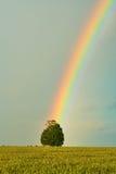 Rainbow over wheat field Stock Photo