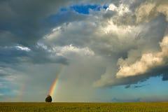 Rainbow over wheat field Stock Image