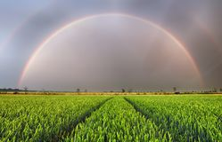 Rainbow over wheat field, panorama Stock Images