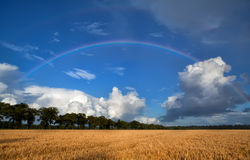 Rainbow over wheat field after shower Royalty Free Stock Image
