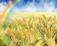 Rainbow Over Wheat Field in Summer Day. Digital Painting, Illustration of a Rainbow Over Wheat Field in Summer Day. Cartoon Style Character, Fairy Tale Story Stock Image