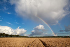 Rainbow over wheat field in summer Stock Photography
