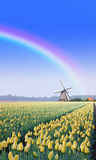 Rainbow over the Windmill at the Tulip Bulb Farm Stock Photos