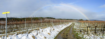 Rainbow over a wine yard in winter Royalty Free Stock Photo