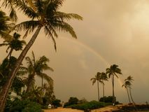 Rainbow among palmtrees. Palmtrees with rainbow and thick clouds Stock Photos