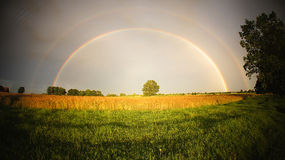 Rainbow panorama. Panoramic view with rainbow double arch over green field and field of wheat stock photo