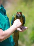 Rainbow parrot Stock Photo