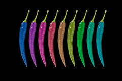 Rainbow of peppers Stock Images