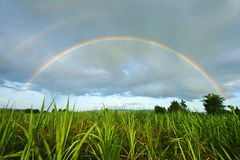Rainbow. The perfect double rainbow over a beautiful meadow in spring Royalty Free Stock Photography