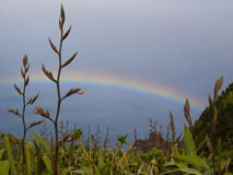 Rainbow with plants Royalty Free Stock Image