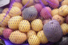 Rainbow potato. Closeup background stock photo, the organic food has full of carbohydrate and Iodine powder which is assorted, tricolor, mixed and mini royalty free stock photography