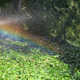 Rainbow during rain in garden in sunny autumn day Royalty Free Stock Image