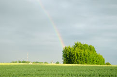 Rainbow after rain over green field in summer Royalty Free Stock Photography
