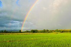 Rainbow after the rain Before sunset in Thailand. Take image at rice farm Royalty Free Stock Image