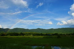 Rainbow rice field Stock Image