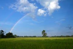 Rainbow on the rice field. Royalty Free Stock Photo