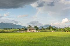 Rainbow and rice fields Royalty Free Stock Images