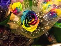 Rainbow Rosa Fotografia Stock