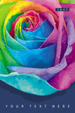 Rainbow rose card dark. Greeting card with futuristic rose colored in the spectrum colours on the dark background Royalty Free Stock Images