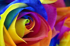 Rainbow rose or happy flower Stock Images
