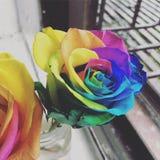 Rainbow Rose. In Jar Royalty Free Stock Photos