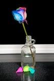 Rainbow rose in vintage bottle Stock Photo