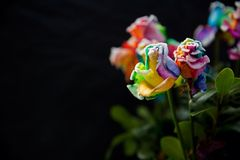 Rainbow roses with black background Royalty Free Stock Images