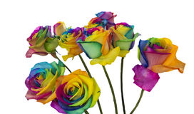 Rainbow roses isolated in white Royalty Free Stock Photo
