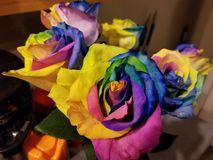 Rainbow roses stock photography