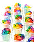 Rainbow roses in raw Stock Photography