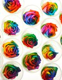 Rainbow roses in raw Royalty Free Stock Photos