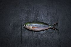 Rainbow runner fish stock photo