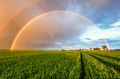 Rainbow Rural landscape with wheat field on sunset Stock Photos