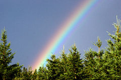 Rainbow's End. A brilliant rainbow appears above the bright green pines Royalty Free Stock Photo