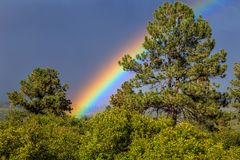 Somewhere Over the Rainbow. Rainbow in the San Juan National Forest, near Durango Colorado Royalty Free Stock Photos