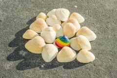 Rainbow shell on the background white shells. Rainbow shell on the background of white shells Stock Photos