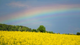 Rainbow shining over blooming canola field Stock Photos