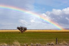 A rainbow shining over a single tree in the country of South Australia on 20th June 2020